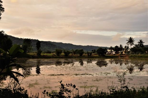 rice-paddies-langkawi-malaysia