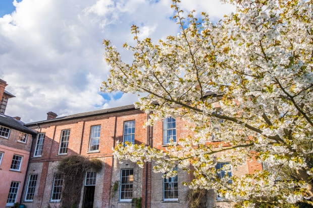 Cherry tree in bloom at Old Hall Community Suffolk